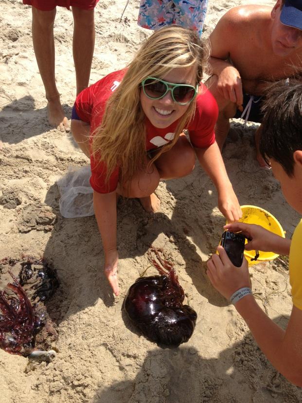 black nettle jellyfish san diego