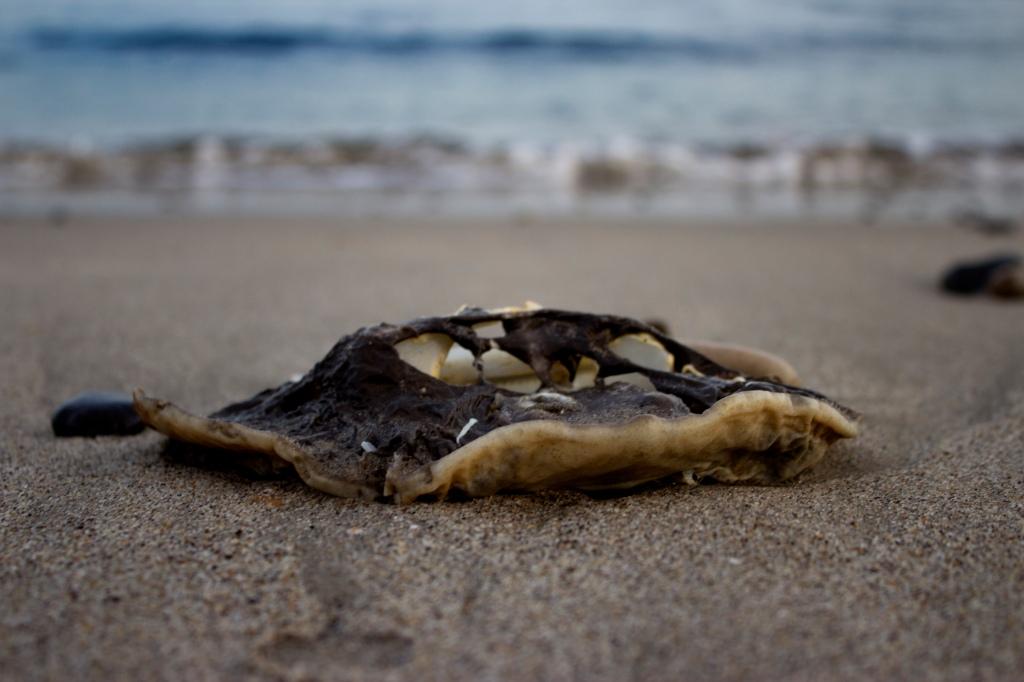 Dead Stingray in Malibu