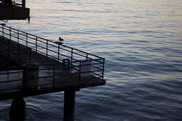 birds on the pier
