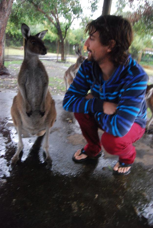 moritz kangaroo