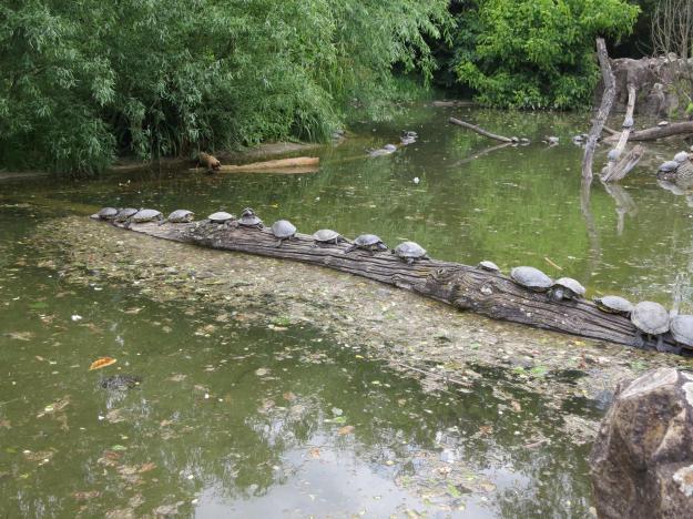 The turtle club of Lyon... Aka Les Tortue
